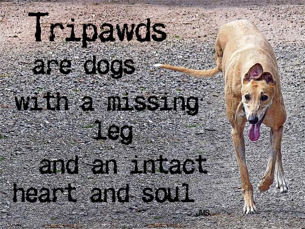 Tripawds