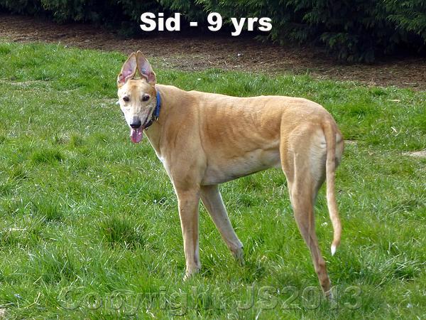 SidTripod-Age